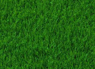 GrassHintergrund